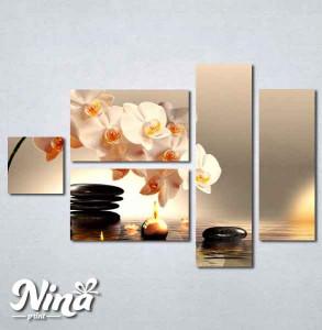Slike na platnu Bela orhideja Nina225_5