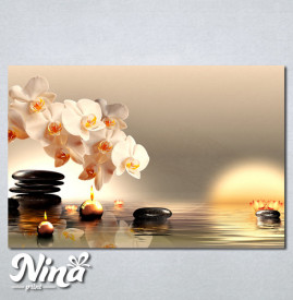 Slike na platnu Bela orhideja Nina225_P