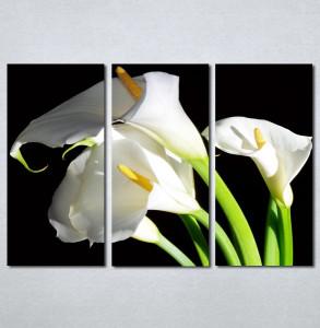 Slike na platnu Bele kale Nina30134_3