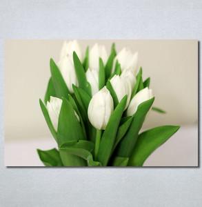Slike na platnu Bele lale Nina30307_P