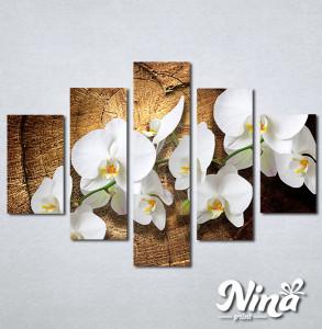 Slike na platnu Bele orhideje Nina323_5