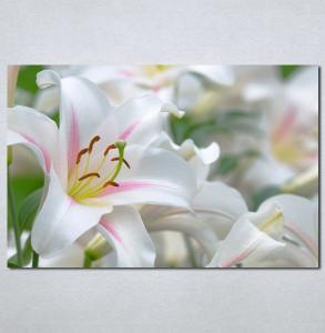 Slike na platnu beli cvet Nina 130_P