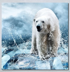 Slike na platnu Beli medved Nina30272