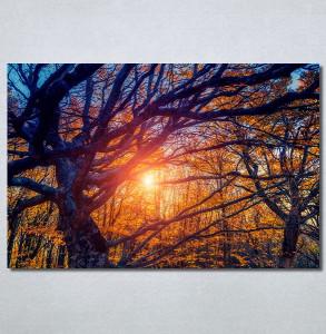 Slike na platnu Drvo Nina30302_P