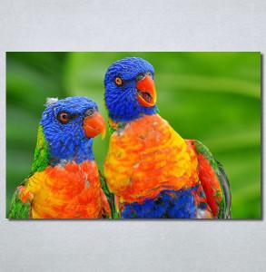 Slike na platnu Dva papagaja Nina30313_P