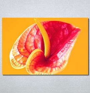 Slike na platnu Flower 2 Nina30301_P