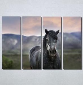 Slike na platnu Konj na poljani Nina30205_4