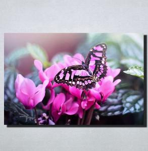 Slike na platnu Leptir Nina160_P