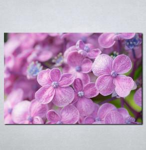 Slike na platnu Ljubicasto cvece Nina081_P