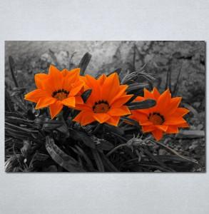 Slike na platnu Narandzasti cvet Nina128_P