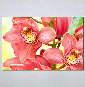 Slike na platnu Orhideje 2 Nina30306_P