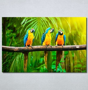 Slike na platnu Papagaji Are Nina30249_P