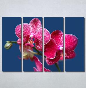 Slike na platnu Pink Orhideja Nina30290_4