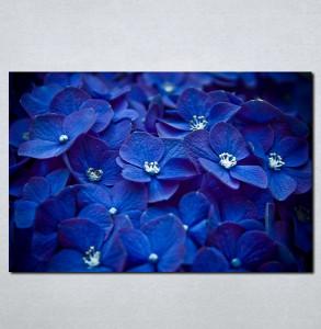 Slike na platnu Plavo cvece Nina059_P