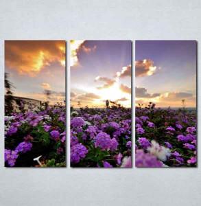 Slike na platnu Polje cveca Nina199_3