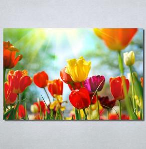 Slike na platnu Tulips 30325_P