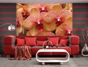 Foto tapeta Orhideje Tapet100
