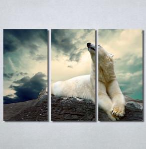 Slike na platnu Beli medved Nina30300_3
