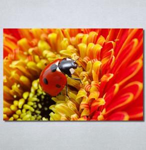 Slike na platnu Bubamara Nina30284_P