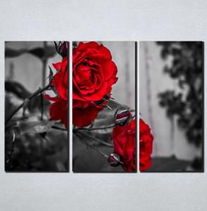Slike na platnu Crvene ruže Nina098_3