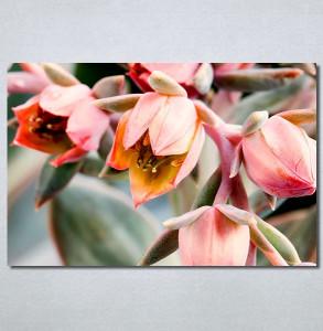 Slike na platnu Cveće Nina30274_P