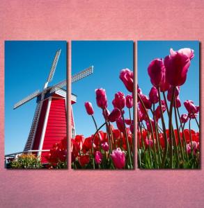 Slike na platnu Holandija Nina30106 _3