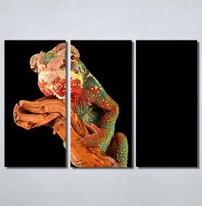 Slike na platnu Kameleon Nina30183_3