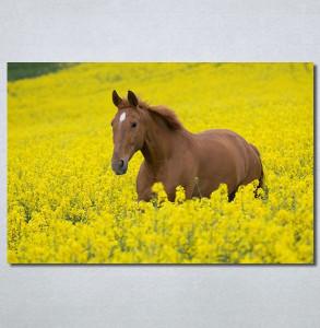 Slike na platnu Konj na žutoj poljani Nina30264_P