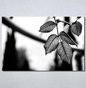 Slike na platnu List Nina30363_P