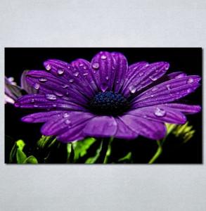 Slike na platnu ljubicasti cvet Nina 132_P