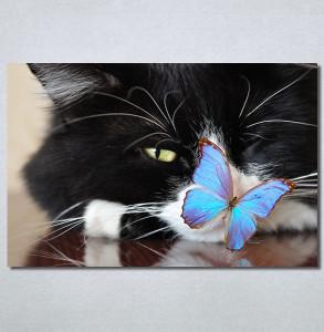 Slike na platnu Mačka i leptir Nina30250_P