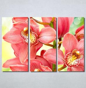 Slike na platnu Orhideje 2 Nina30306_3