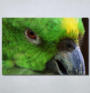 Slike na platnu Papagaj zeleni Nina30349_P