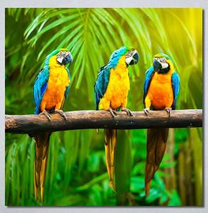 Slike na platnu Papagaji Are Nina30249