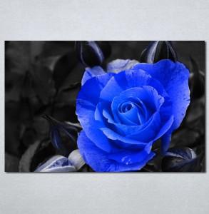 Slike na platnu Plava ruza Nina127_P