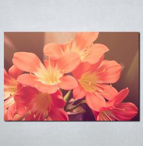 Slike na platnu Roze cveće Nina087_P