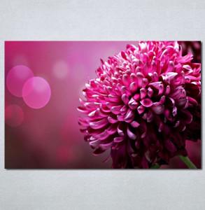 Slike na platnu Roze cvet Nina 131_P