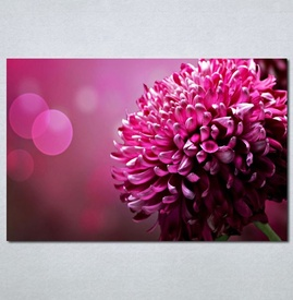 Slike na platnu rozii cvet Nina 131_P