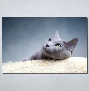 Slike na platnu Siva mačka Nina30148_P