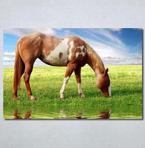 Slike na platnu Slika konja Nina30358_P