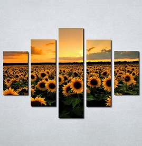 Slike na platnu Suncokreti Nina070_5