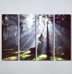 Slike na platnu Svetlost u šumi Nina30180_4