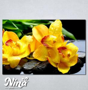 Slike na platnu Žuta orhideja Nina252_P