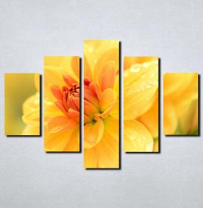 Slike na platnu Žuto cveće Nina111_5