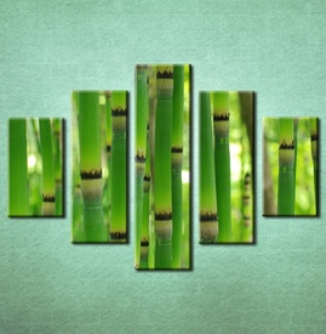 Slike na platnu Bambus Nina3093_5