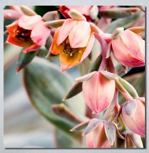 Slike na platnu Cveće Nina30274
