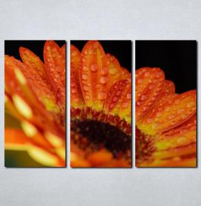 Slike na platnu Gerber Nina037_3