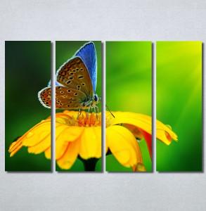 Slike na platnu Leptir Nina30237_4