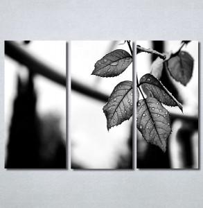 Slike na platnu List Nina30363_3