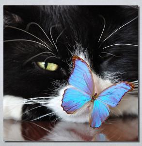 Slike na platnu Mačka i leptir Nina30250